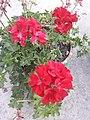 Flower20180527 184658.jpg