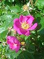 Flower dsc05301.jpg