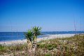 Folly-Beach-Lighthouse-Inlet-foliage-sc.jpg