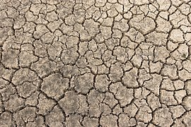 Fond sec dans le marais du Conseiller.jpg