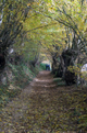 Footpath in Fraiture (Sprimont) - Wallonia - Belgium.png
