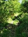Footpath through woodland - geograph.org.uk - 1329991.jpg
