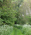 Footpath to the Blue Lias - geograph.org.uk - 1306428.jpg