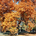 Forest-Hill-Autumn 2009.jpg