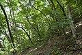 Forest in Mt.Kinoko 03.jpg