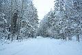 Forest near Ob river in Altai Region 16.JPG