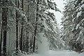Forest near Ob river in Altai Region 37.JPG