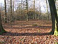 Forest of Dean near Edge End - geograph.org.uk - 1095426.jpg