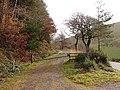 Forestry track through Coed Cwmnewydion - geograph.org.uk - 285923.jpg