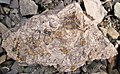 Fossiliferous mudshale (Price Formation, Lower Mississippian; Cloyds Mountain roadcut, Valley Coalfield, Virginia, USA) 7 (30494711345).jpg