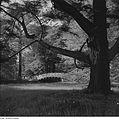 Fotothek df ps 0000757 Gärten - Parks ^ Landschaftsgärten - Landschaftsparks ^ S.jpg