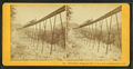 Frankenstein Trestle and Train, P. & O.R.R., Crawford Notch, N.H, from Robert N. Dennis collection of stereoscopic views.png