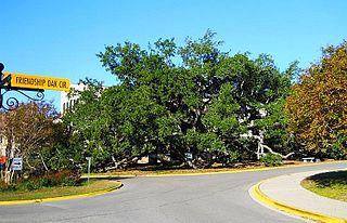 Friendship Oak (Long Beach, Mississippi)
