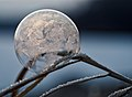 Frozen snowflake bubble (Unsplash).jpg