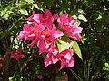 FvfSanJoseflowers9955 13.JPG