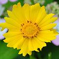 Garden-036.jpg