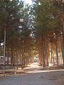 Garden of Pine - West of Omar Khayyam Tomb - Nishapur 02.JPG