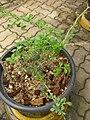 Gardenology.org-IMG 7688 qsbg11mar.jpg
