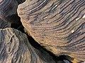 Geological beauty (4434415291).jpg