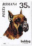 German-Boxer-Canis-lupus-familiaris Romania 1971.jpg