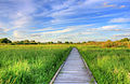 Gfp-wisconsin-madison-the-nature-boardwalk.jpg