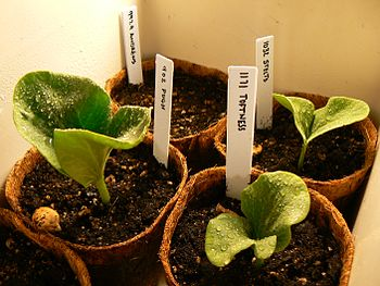 Seedlings from various seeds.
