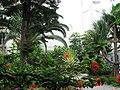 Gibraltar - Oase in der Stadt 2 - panoramio.jpg