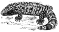 Gila Monster (PSF).png