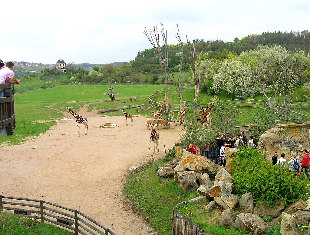 Giraffe exposition 2, Prague zoo