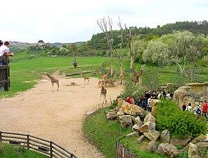 Prague Zoo - Giraffe exposition