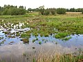 Gloucester, Monk Meadow, wetlands - geograph.org.uk - 1081079.jpg