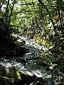 Golden Mountain Stream - geograph.org.uk - 54020.jpg