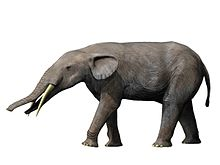Gomphotherium NT small.jpg