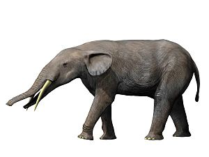 1837 in paleontology - Gomphotherium