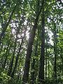 Gornja Trepca Spa in Serbia 5260 18.jpg