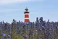 Gotland Lighthouse with Echium vulgare.JPG