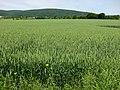 Grain - panoramio (1).jpg