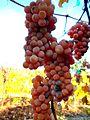 Grapes (6342672622).jpg