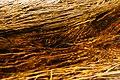 Grass Threads (2610443360).jpg