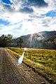 Great Smoky Mountains National Park (d6250ec9-341f-4a49-a5fc-988f63c59a1f).jpg