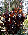 Green Spring Gardens Fall 2013 (10106984536).jpg