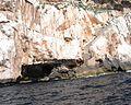 Grotta di Nettuno Alghero 13.jpg