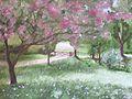 Gwalia In Blossom.jpg