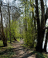 Hållets naturreservat Nyköping.jpg