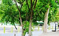 HAZRATH SYED SHAH VALI ULLA DARGAH ( THOPPUR DARGAH ) - panoramio (2).jpg