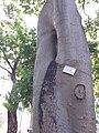 HK CWB 銅鑼灣 Causeway Bay 維多利亞公園 Victoria Park tree trunk n green leaves December 2019 SSG 45.jpg