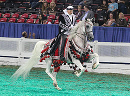 A gray horse being ridden by a person in red, black, and white Arabic-styled robes with a white Arabic-style head covering. The saddle cloth and reins are also covered in ornamented cloth with tassels.