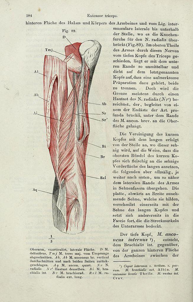 Großzügig Anatomie Labor Byu Ideen - Menschliche Anatomie Bilder ...