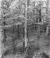 Harold Gilman - Beech Wood - RES.32.9 - Museum of Fine Arts.jpg