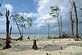 Havelock Island, Elephant Beach, Andamans.jpg